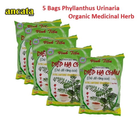 Two bags phyllanthus urinaria L tea bag  - Organic medicinal herb