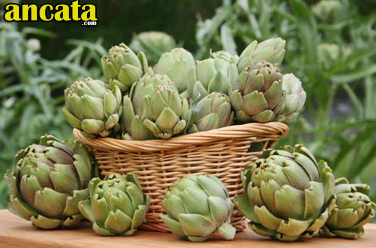 Do you know anything about Artichokes?