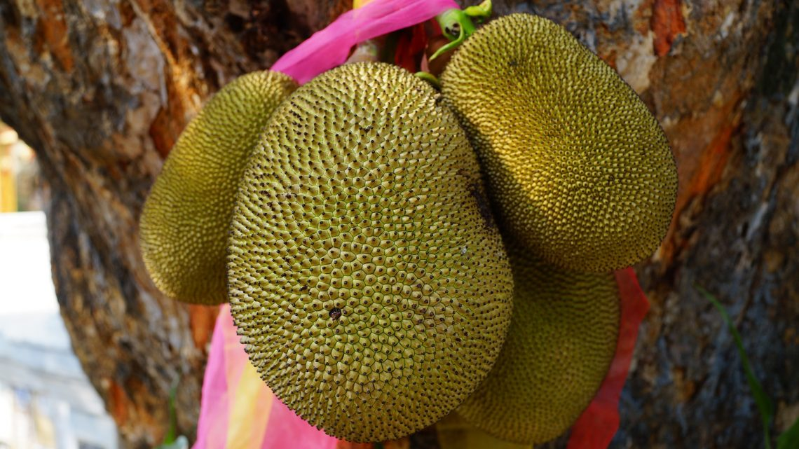 Top 10 Unusual Exotic Fruits From VietNam Asia You Must Try – Jackfruit
